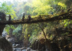 """Bridges made of living roots in the biodiversity hotspots of northeast India are good examples of nature-friendly traditions (Image: <a href = """"https://commons.wikimedia.org/wiki/File:10_Shnongpdei_1.JPG"""">Anselmrogers</a> / <a href = """"https://creativecommons.org/licenses/by-sa/4.0/deed.en"""">CC BY-SA 4.0</a>)"""