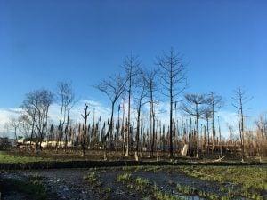 Baghjan aftermath explosion Assam, Prakash Bhuyan