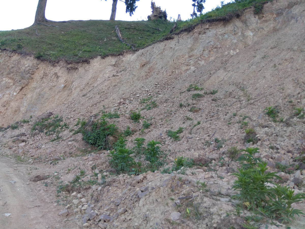 Road construction without any understanding of the ecosystems has led to immense loss of medicinal plants in Kashmir [image by: Mudassir Kuloo]