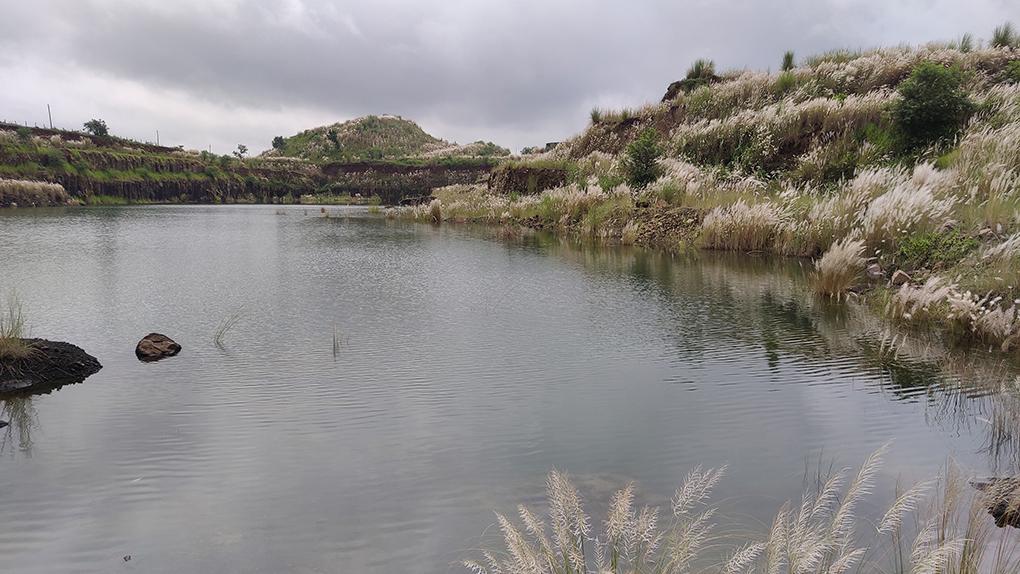 इस इलाके के कुछ ऐसे क्षेत्रों में शरद ऋतु में सरकंडे का फूल खिलते हैं जहां पर प्रदूषण नहीं है। स्थानीय लोग ऐसी साफ-सुथरे जल स्रोतों पर निर्भर हैं। [Image by: Gurvinder Singh]