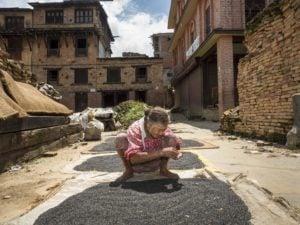 lentil farming nepal