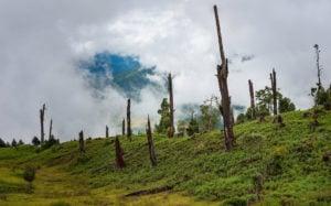 deforestation, Tawang, Arunachal Pradesh, Daniel J. Rao / Alamy