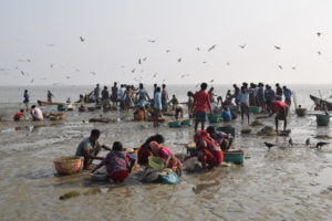 Women and children of the Jaladash community join the returning fishers to sort the catch at the Bangla Bazar Fish Ghat in Sarikait, Sandwip Island, Chittagong district [all images by: Rafiqul Islam Montu]