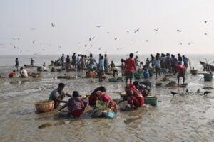 Bangladesh fisheries