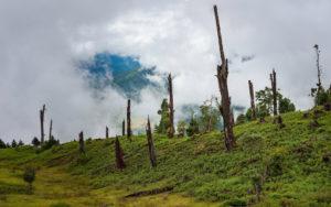 deforestation in Tawang Arunachal Pradesh Himalayas