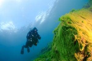 Algae covered weeds in Lake Baikal [Image by: Alamy]