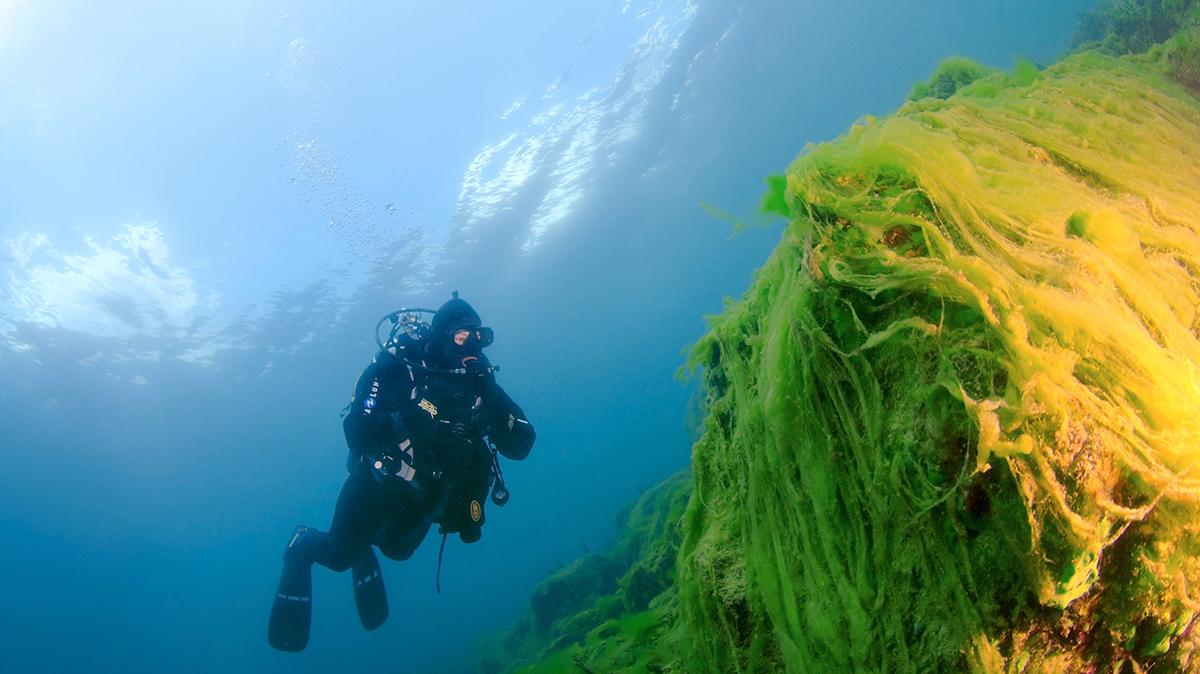 Lake Baikal swimmer