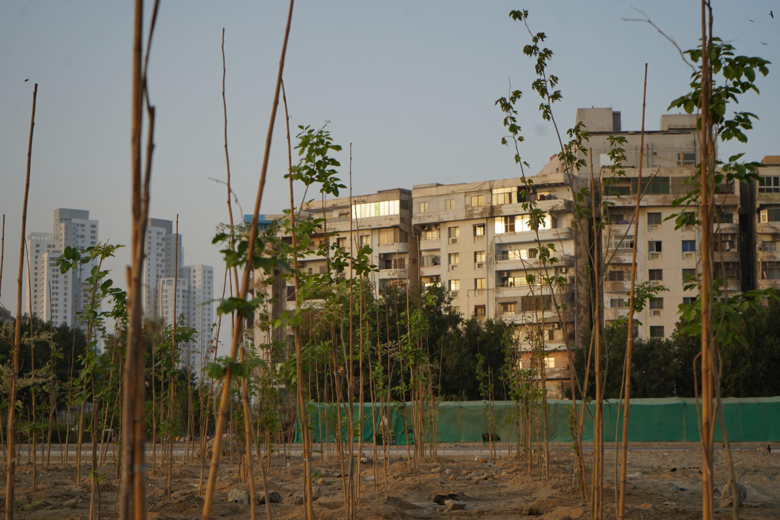 Clifton Urban Forest, Karachi, Pakistan, Manoj Genani