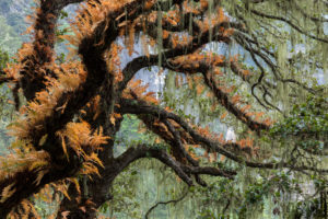 Forest near the Tiger's Nest monastery, Paro, Bhutan (Image: Michal Sikorski/Alamy)