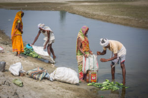 Farmers clean cucumbers in the Kamala river
