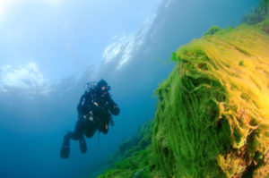 Выброшенные на берег водоросли. Пролив Ольхонские Ворота. (Фото: Алами)