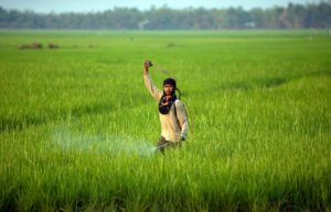 Farmer Som Boo sprays insecticide on his rice field in Reang Kesei, located in Cambodia's western Battambang province February 10, 2009. REUTERS/Adrees Latif (CAMBODIA)