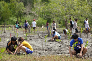 Trees are planted to restore mangroves in Satun, south Thailand (Image: Alamy)