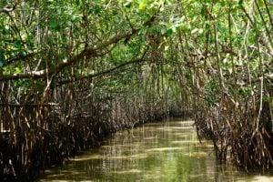 The Pichavaram mangrove forest acted as a bio-shield during the 2004 Indian Ocean tsunami (Photo by Joydeep Gupta)