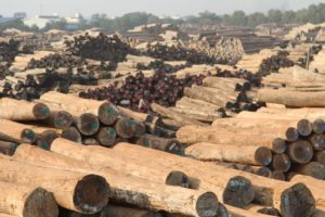 A timber log yard in Myanmar