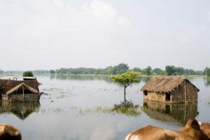 Houses submerged , Kosi river flood , Koshi , Purnea , Purnia district , Bihar , India , Asia