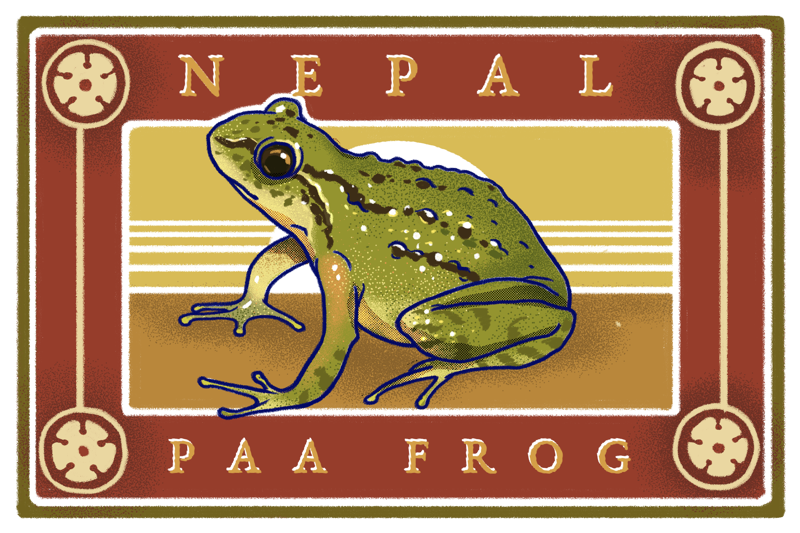 Illustration of a Nepal paa frog by Kabini Amin
