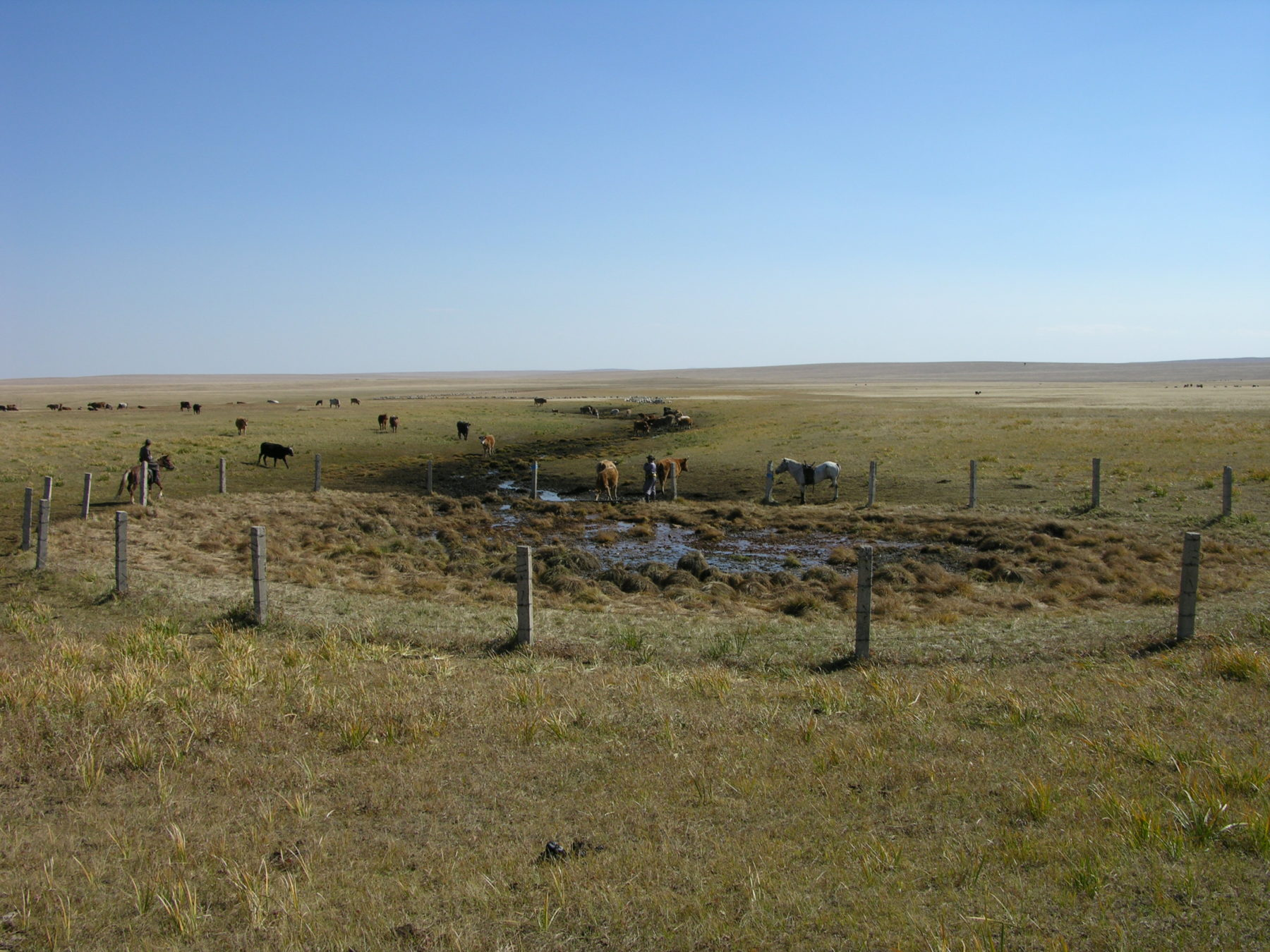 https://www.thethirdpole.net/content/uploads/2021/06/Landscapes-of-Dauria-Blue-Horse-10-scaled.jpg