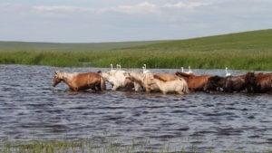 Mongolia Russia Lake Blue Horse