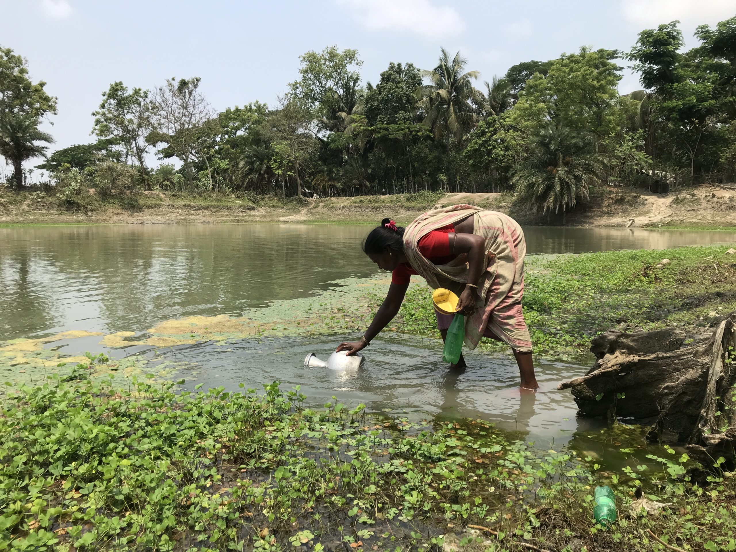 A woman is collecting water from a pond in rural Bangladesh