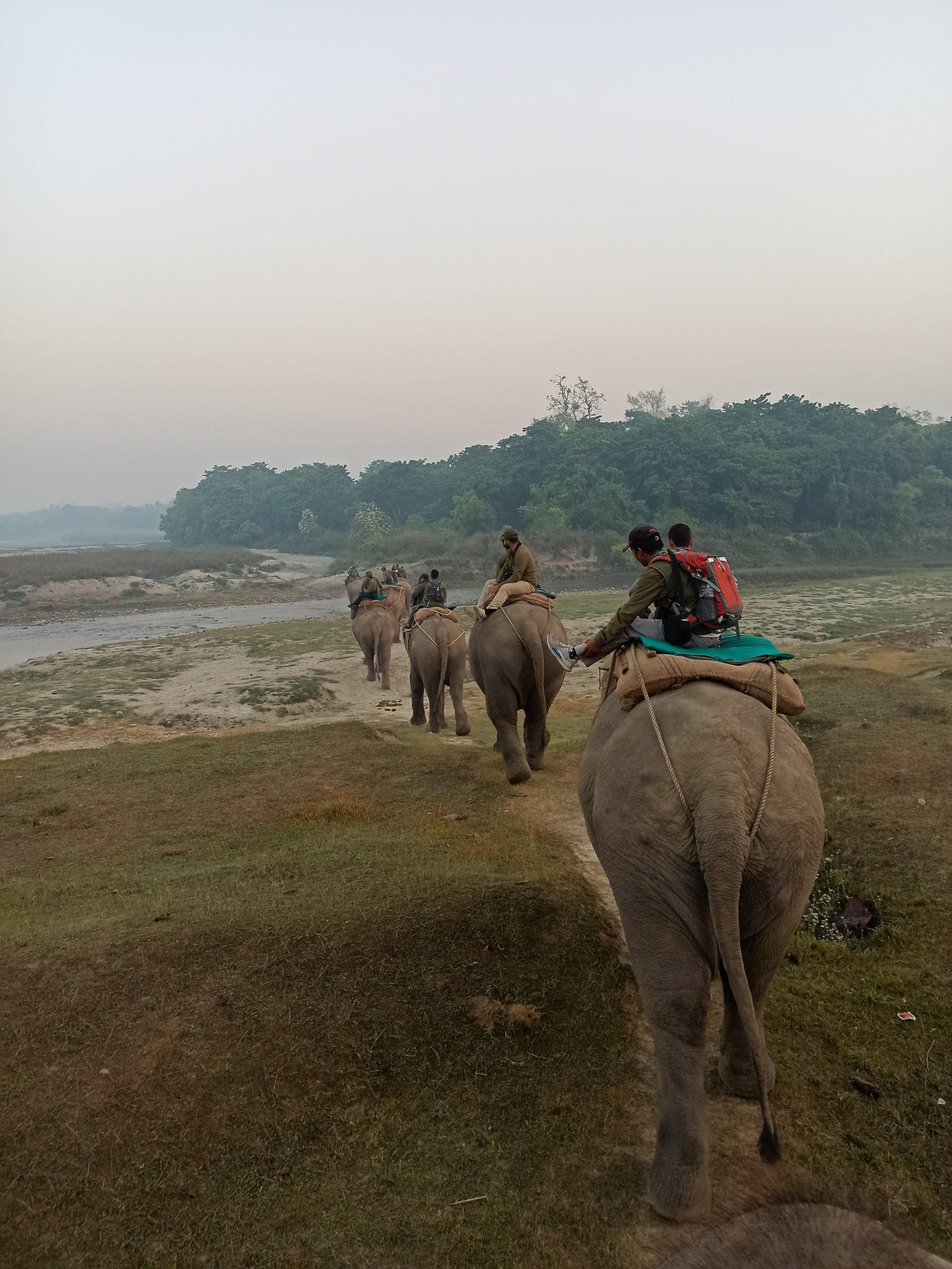 rhino census nepal