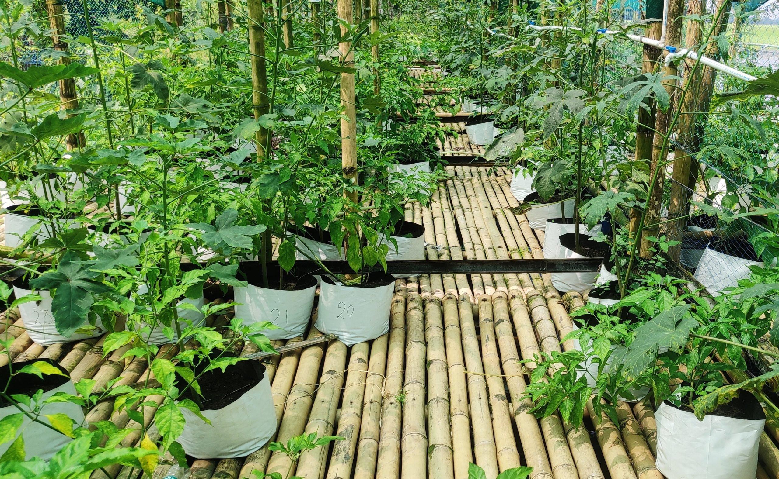 Grow bags on a floating bed, Majuli, Assam, India, Gurvinder Singh