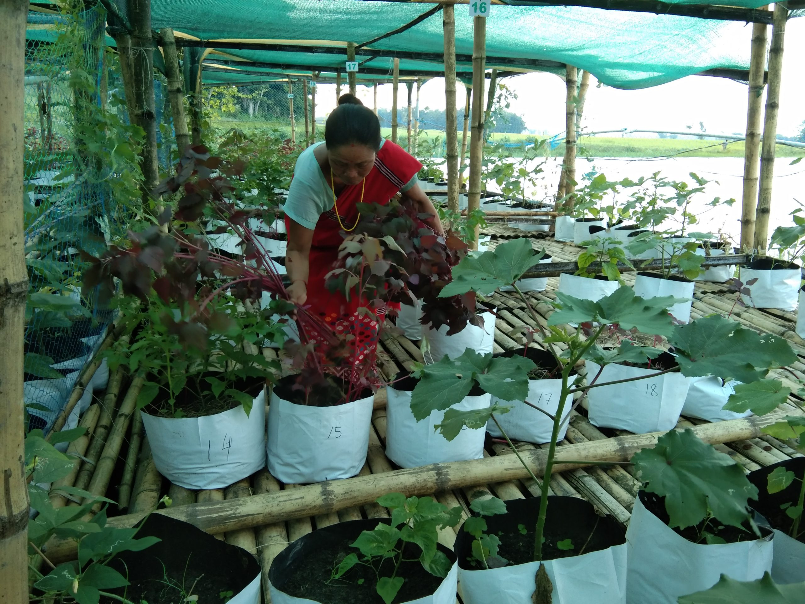 A farmer tends her crops on a floating platform. This method of growing vegetables and herbs has helped farmers in Majuli deal with flooding and irregular rainfall. (Image: South Asian Forum for Environment)