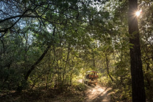 "(Image: <a href=""https://www.flickr.com/photos/usaid-biodiversity-forestry/25430038127/"">Jason Houston / USAID</a>, <a href=""https://www.flickr.com/photos/usaid-biodiversity-forestry/"">Flickr</a>, <a href=""https://creativecommons.org/publicdomain/mark/1.0/"">Public domain</a>)"